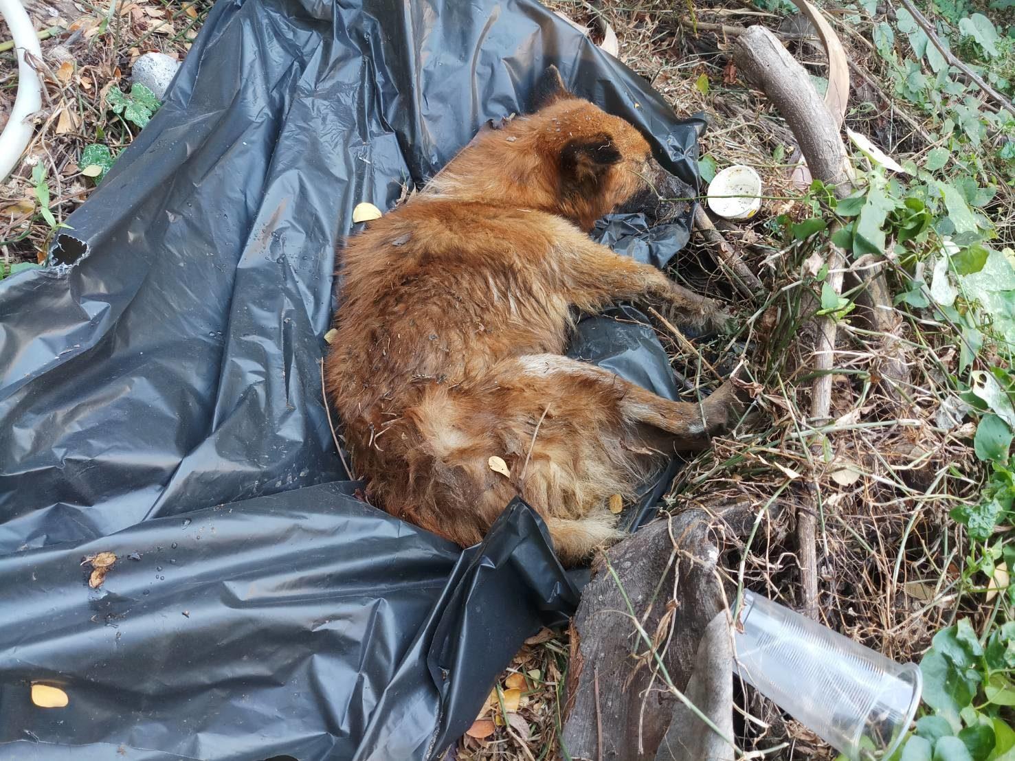 Dogilike.com :: สะเทือนใจ! คนใจดำจับหมาแก่ป่วยหนักใส่ถุงขยะโยนทิ้งริมคลอง
