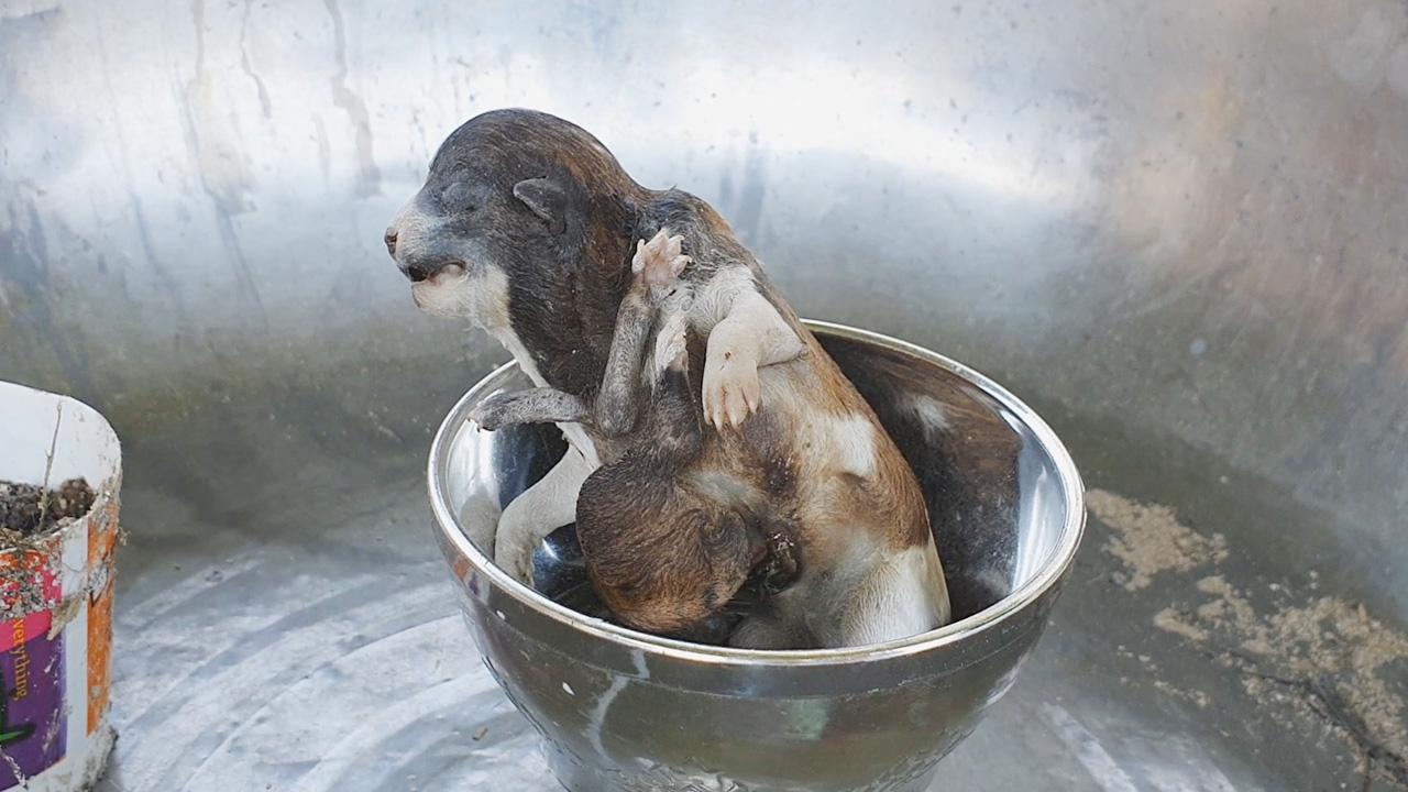 Dogilike.com :: สุดแปลก! พบแม่หมาออกลูกมี 8 ขา 6 นิ้ว