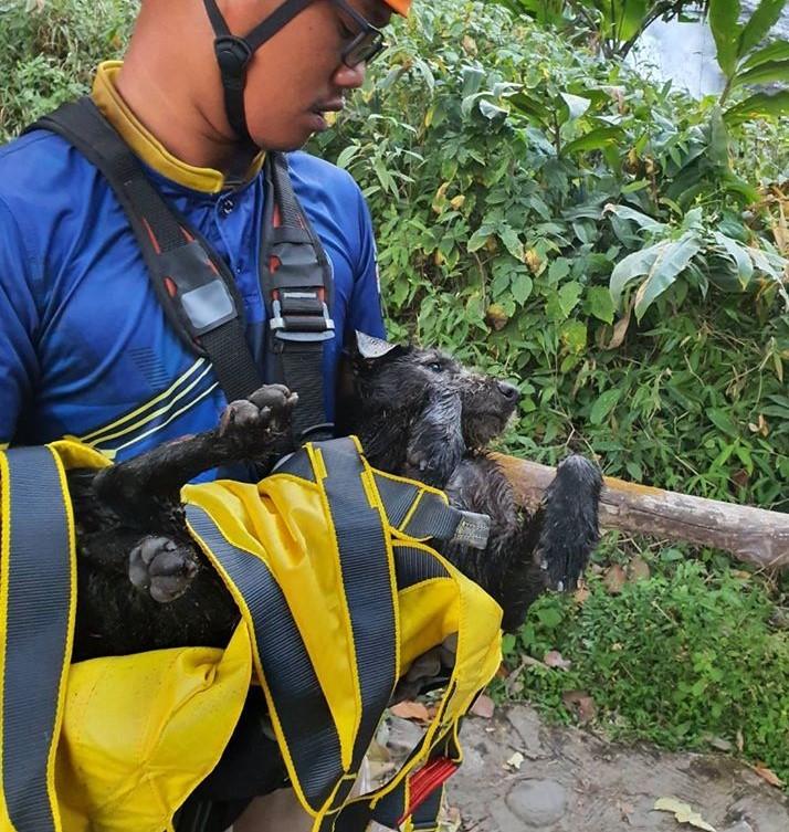 Dogilike.com :: เร่งช่วยน้องหมา หลังมีคนพบติดอยู่หน้าผามานานกว่า 2 วัน