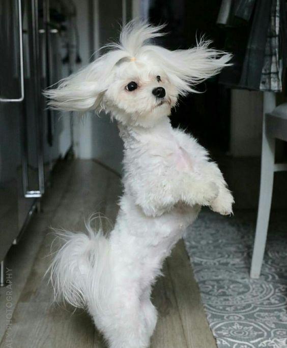 Dogilike.com :: 4 พฤติกรรมของน้องหมาที่ดูน่ารัก แต่จริง ๆ แล้วแฝงไปด้วยอันตราย!
