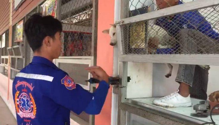 Dogilike.com :: พบลูกสุนัขหัวติดเสาลูกกรงโรงอาหารโรงเรียน คาดความหิวเป็นเหตุ