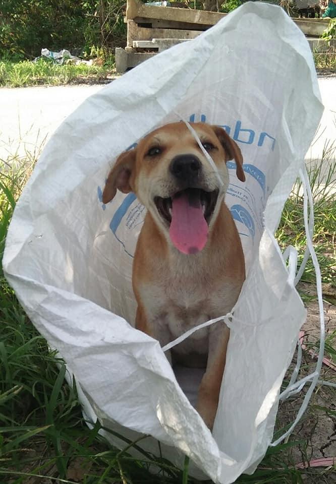 Dogilike.com :: สุดสะเทือนใจ! หญิงสาวพบน้องหมาถูกยัดกระสอบทิ้งไว้หน้าบ้าน