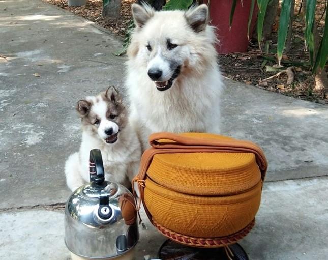 Dogilike.com :: �น่าเอ็นดู� พี่แก้ว น้องก้อง หมาวัดแสนรู้คอยติดตามหลวงปู่ไม่ห่าง