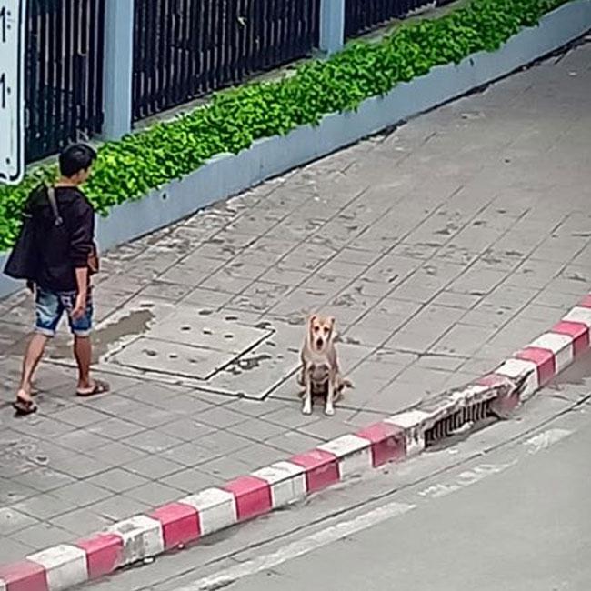 Dogilike.com :: บุญคุณต้องทดแทน...หมาจรแสนรู้เฝ้ารับส่งหญิงสาวไปทำงาน หลังผูกมิตรด้วยไก่ย่าง