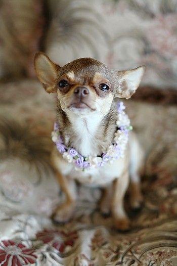 Dogilike.com :: จัดอันดับ 5 สายพันธุ์น้องหมาที่ถูกนำมาแสดงหนังมากที่สุด