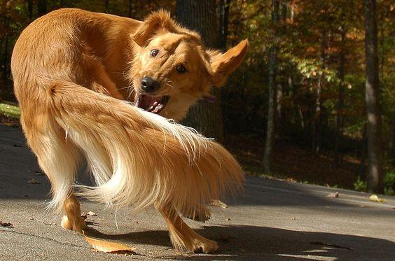 Dogilike.com :: อยากรู้ไหม ทำไมน้องหมาชอบหมุนตัว?