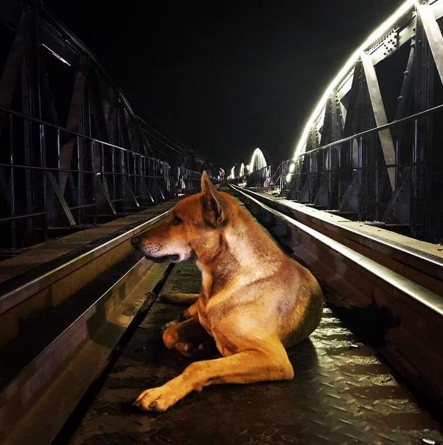 Dogilike.com :: �เจ้าโชค� ตูบแสนรู้ประจำสถานีรถไฟแม่น้ำแคว