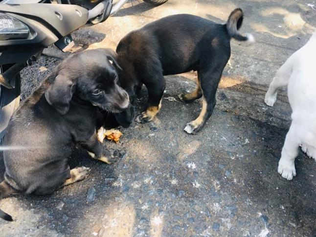 Dogilike.com :: หญิงสาวเล่าเหตุการณ์...แม่หมามาสะกิดขาขออาหารไปให้ลูกกิน