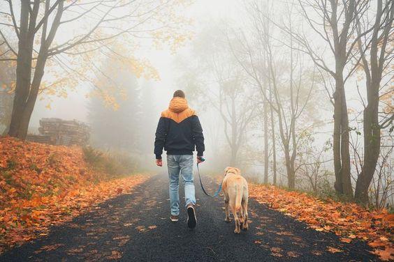 Dogilike.com :: 5 พฤติกรรมที่ควรหยุด เพราะจะทำให้น้องหมาอ้วนโดยไม่รู้ตัว!
