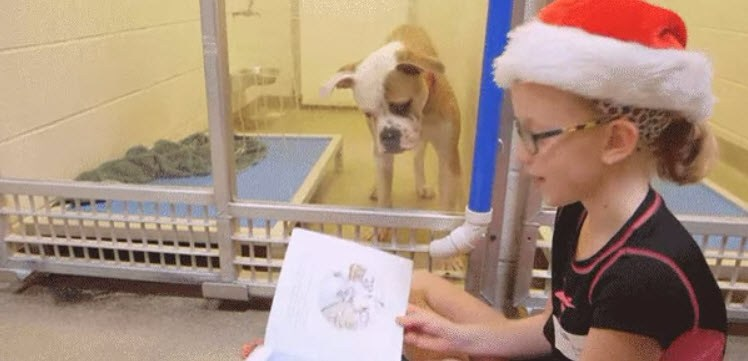 Dogilike.com :: ความสุขสร้างได้...เมื่อเด็ก ๆ อาสาอ่านหนังสือให้น้องหมาไร้บ้านฟัง