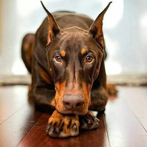 Dogilike.com :: จัดอันดับ 5 สายพันธุ์น้องหมาที่เหมาะกับสาวโสดมากที่สุด
