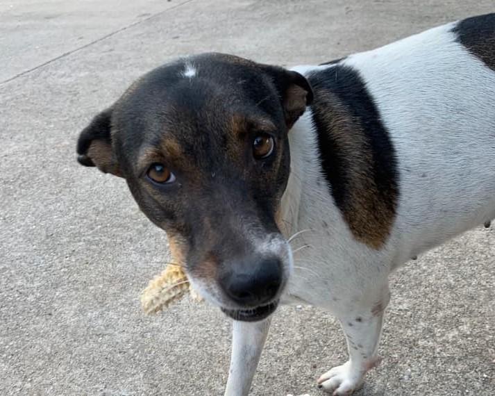 Dogilike.com :: ไม่ขอกินฟรี! หมาจรแสนรู้ชอบคาบของมาแลกข้าวทุกวัน
