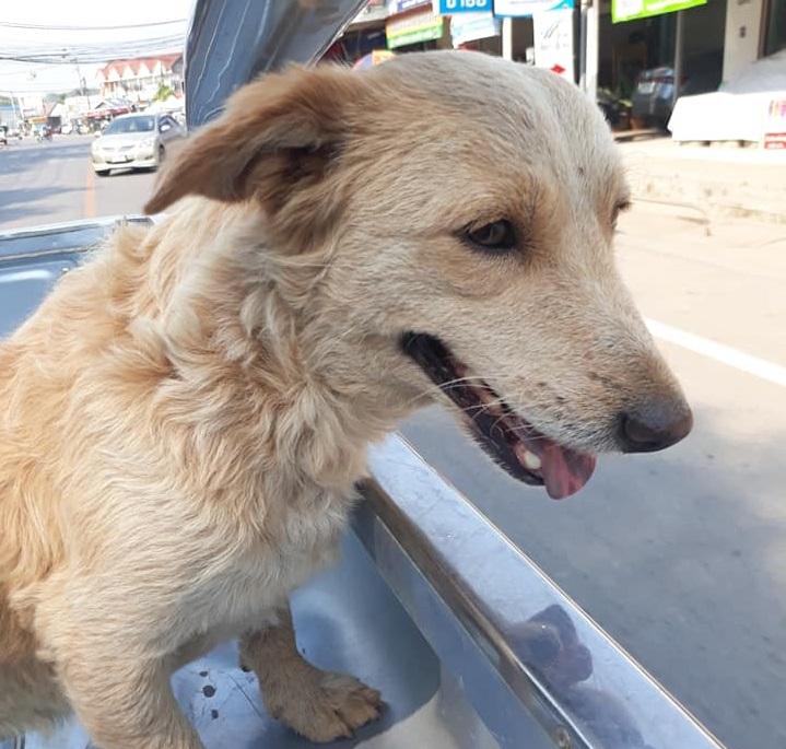 Dogilike.com :: พลิกแผ่นดินหา! หลังเจ้าตูบหายออกจากบ้านนาน 6 วัน