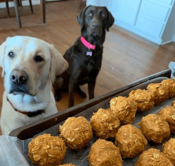 Dogilike.com :: จัดอันดับ  5  อาหารที่ควรพักก่อน! ถ้าไม่อยากให้น้องหมาอ้วน