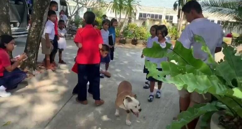Dogilike.com :: พบสุนัขหลุดวิ่งเข้าวัดและโรงเรียน หวั่นเป็นอันตรายแก่ผู้คน