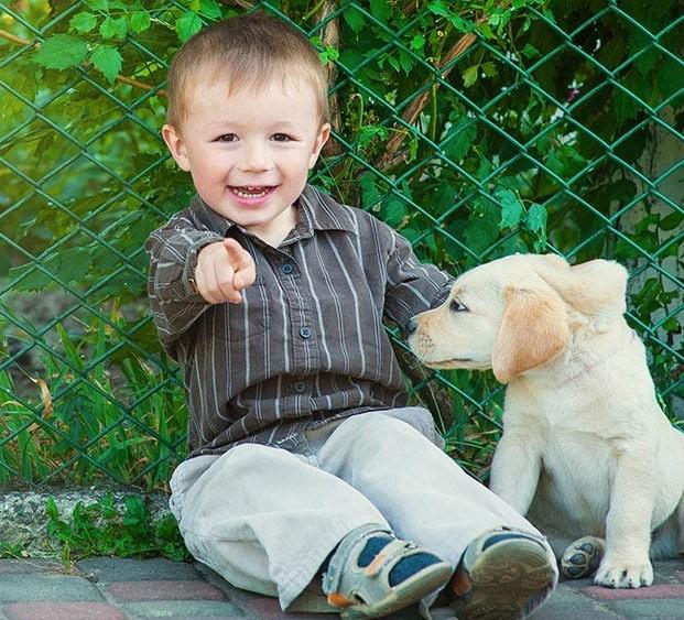 Dogilike.com :: คำถามคาใจทาสหมา จริง ๆ แล้วน้องหมาชอบถ่ายรูปรึเปล่านะ?