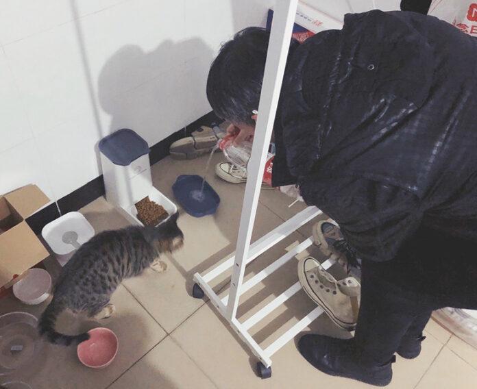 Dogilike.com :: อาสาสมัครรวมตัว ตะเวนออกช่วยหมาแมวที่อู่ฮั่น