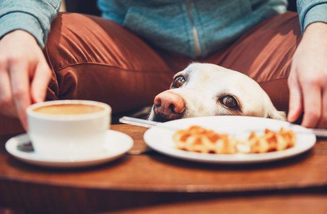 Dogilike.com :: พาน้องหมาออกไปเที่ยวนอกบ้านยังไง ไม่ให้ดราม่าแบบในข่าว!