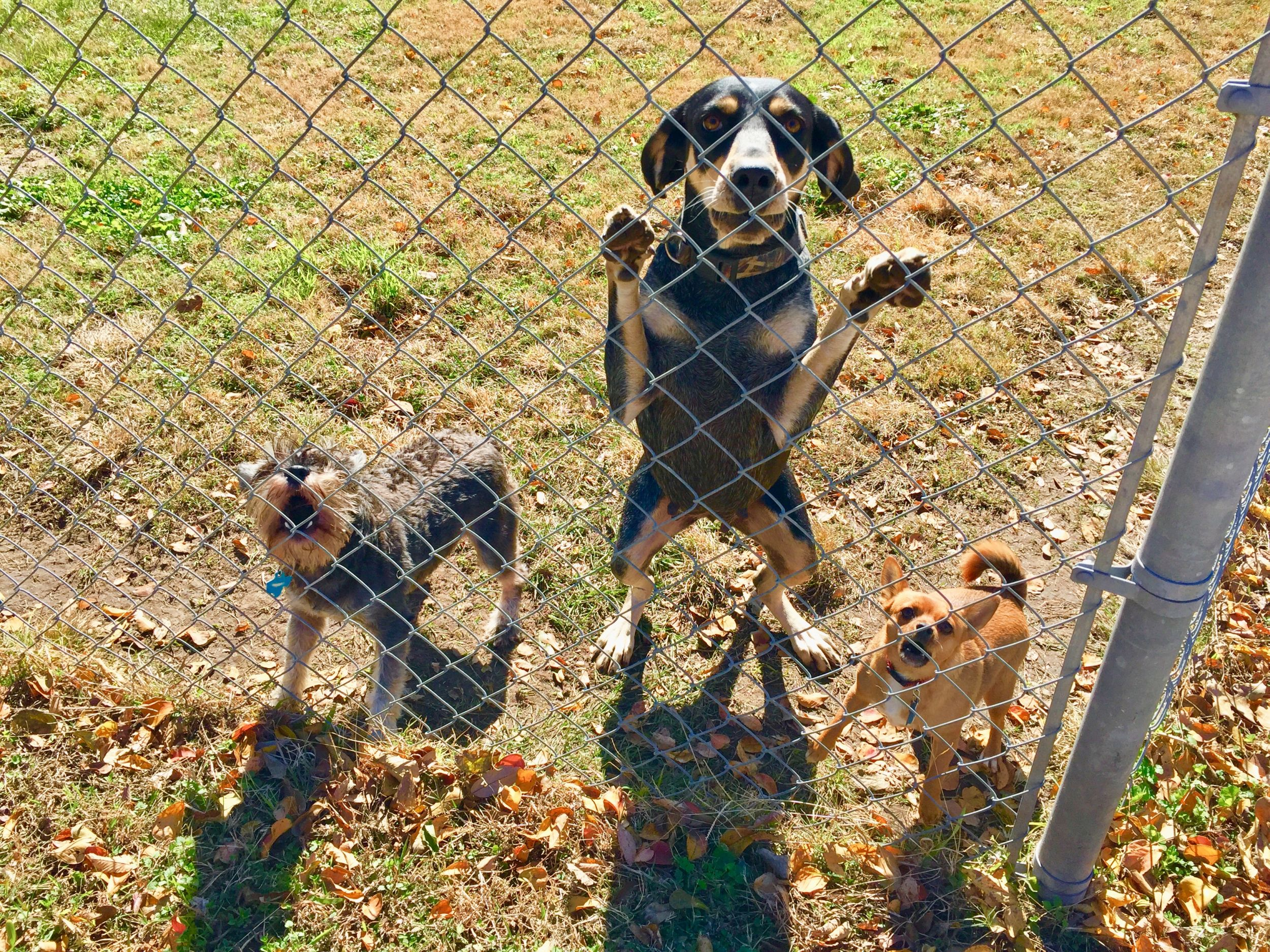 Dogilike.com :: จัดการปัญหา น้องหมาได้ยินเสียงกริ่งแล้วเห่าจนบ้านแทบแตก