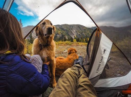 Dogilike.com :: How to พาน้องหมาไปนอนเต้นท์ยังไงไม่ให้เป็นภาระสังคม!