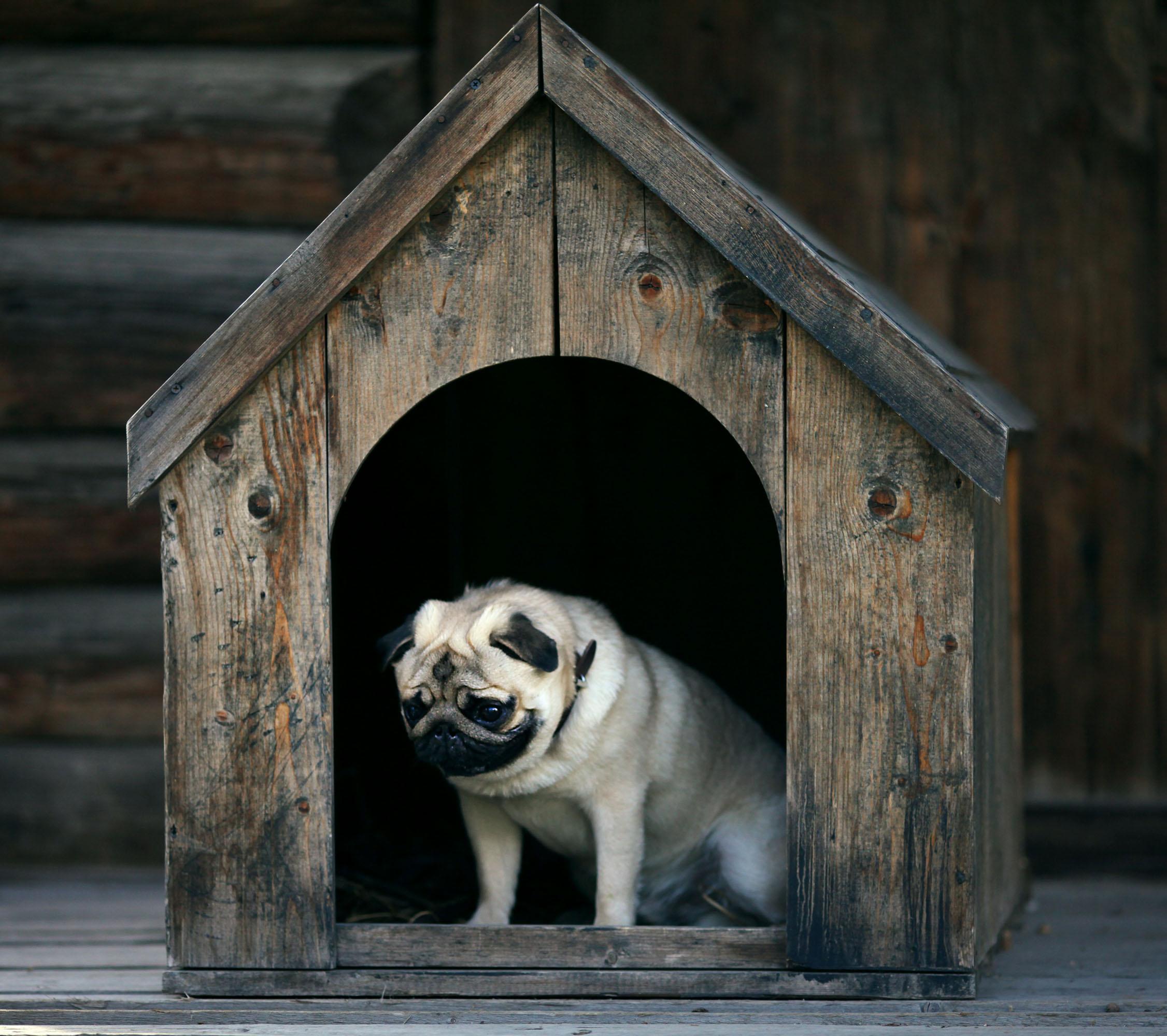 Dogilike.com :: รับมือ หมาแก่ ... ทำความเข้าใจกับการเปลี่ยนไปของน้องหมาเมื่อเข้าสู่ช่วงสูงวัย