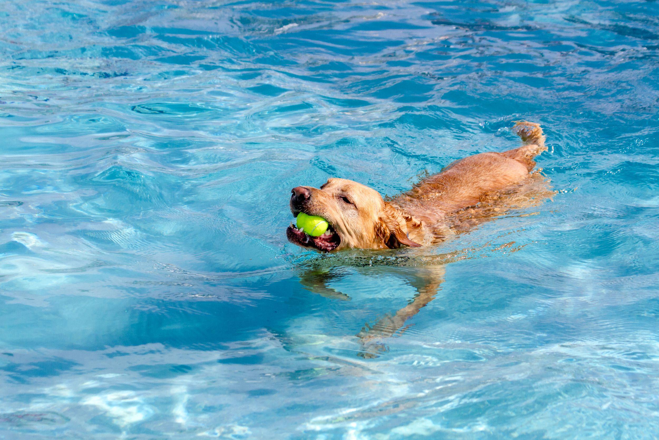 Dogilike.com :: [คู่มือประจำบ้าน] รวมวิธีปฐมพยาบาลเมื่อเกิดเหตุไม่คาดคิดกับน้องหมา!!