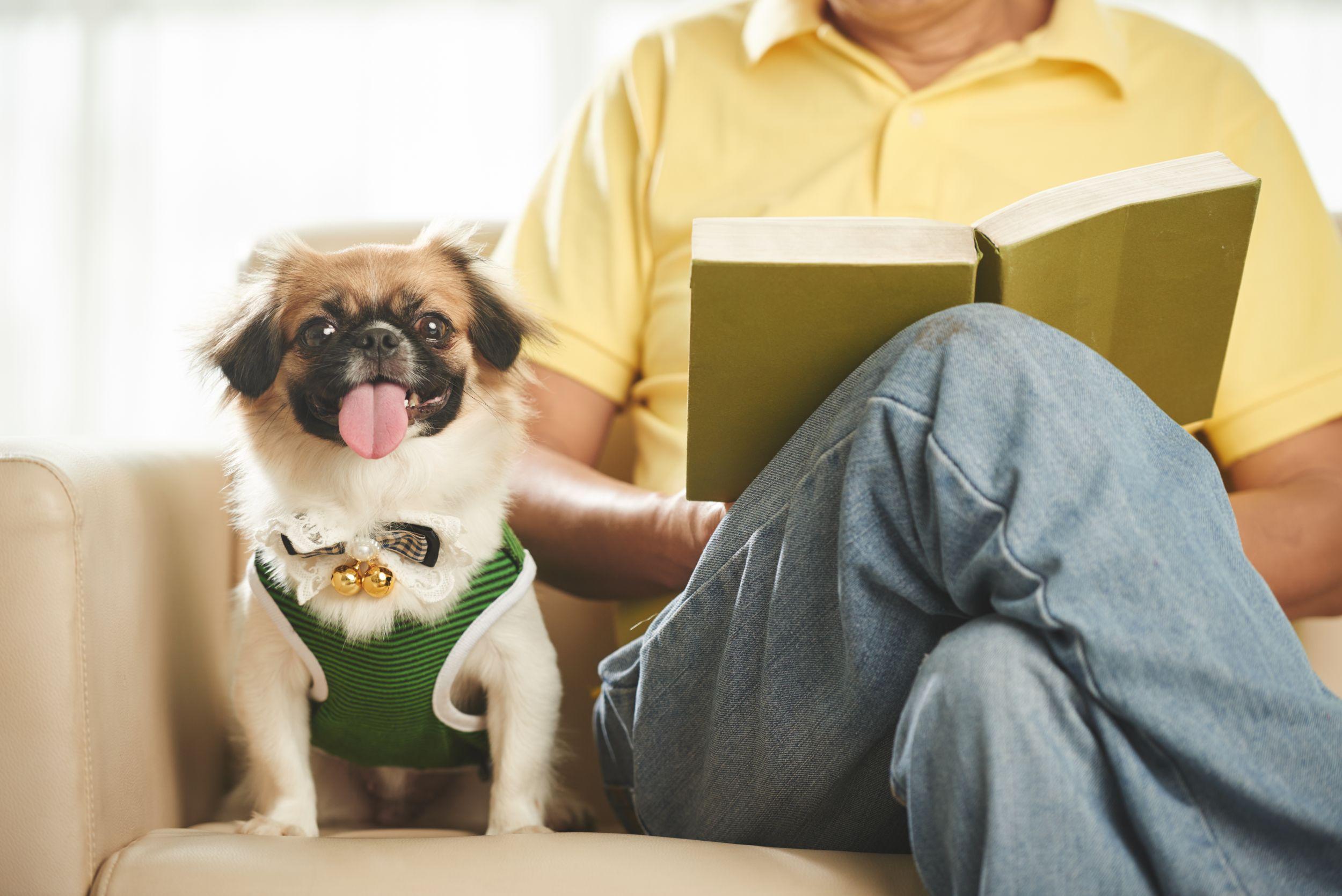 Dogilike.com :: เลี้ยงน้องหมาแบบ New Normal ... แฮปปี้ชีวิตดีทั้งเจ้าของ ทั้งน้องหมา