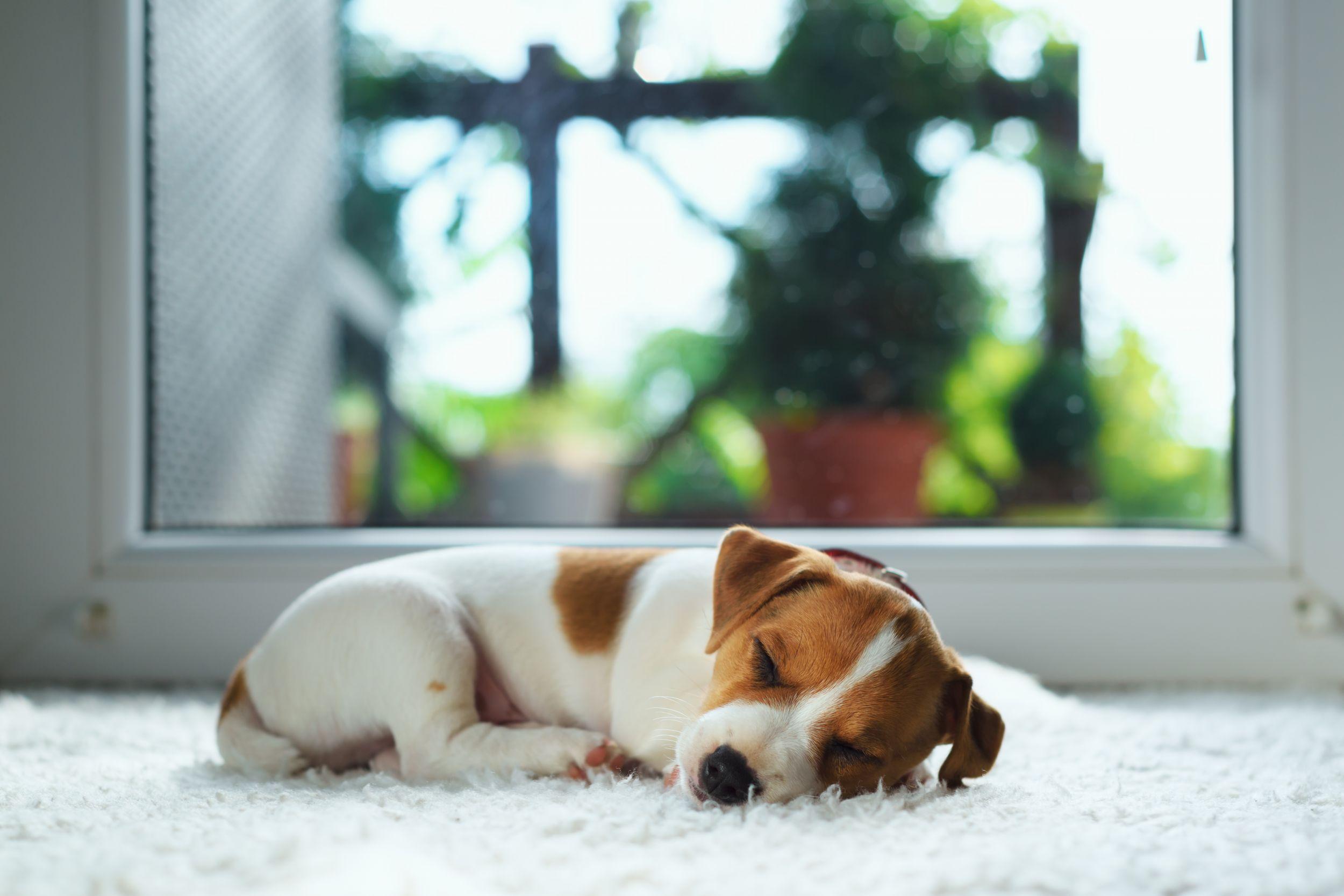Dogilike.com :: 5 ข้อปฏิบัติที่ลดความเสี่ยงไม่ให้น้องหมาต้องป่วยในช่วงโควิดระบาด