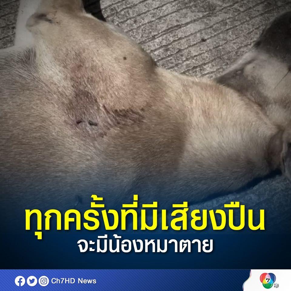 Dogilike.com :: ชาวบ้านผวา เสียงปืนปริศนาทำหมาตายแล้ว 20 ตัว!