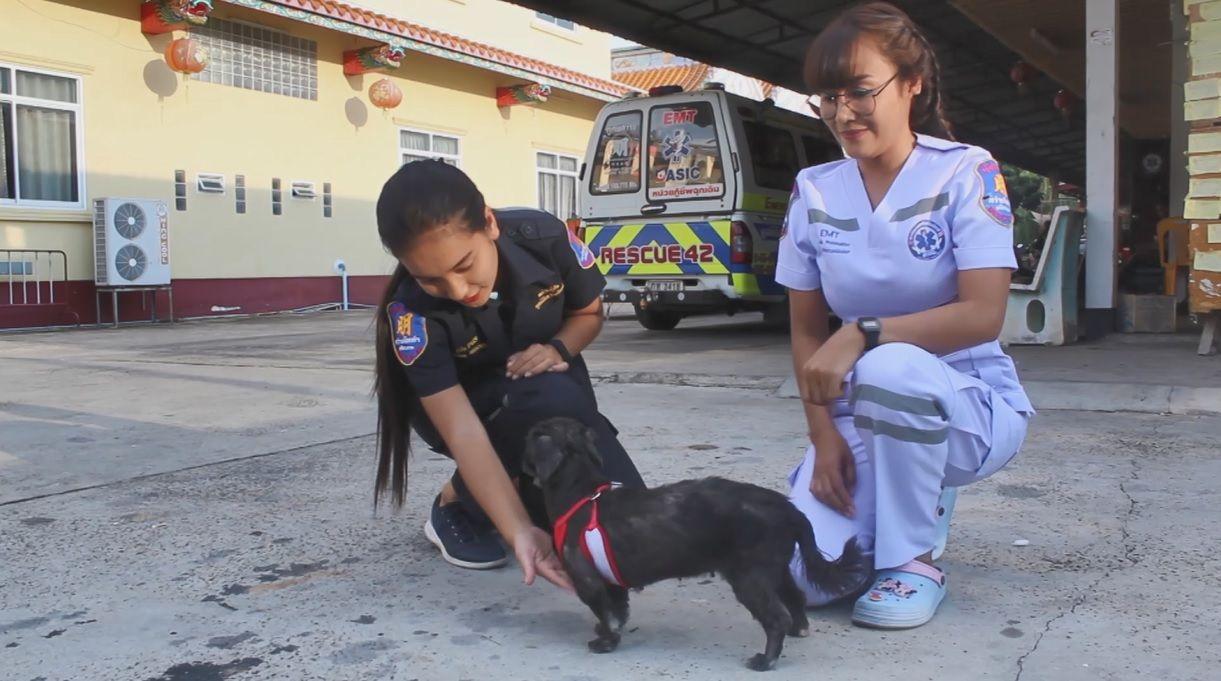 Dogilike.com :: กู้ภัยใจดี พบน้องหมากลางถนน จอดรถช่วย - พาไปหาหมอ