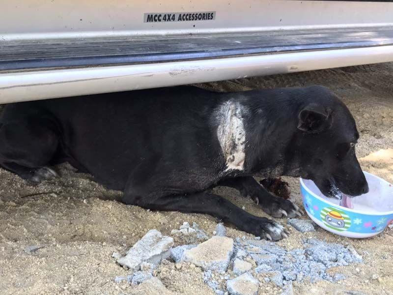 Dogilike.com :: เหี้ยมเกินคน ... แอบปาดคอหมาดำ ชาวบ้านเชื่อหวังล้างอาถรรพ์
