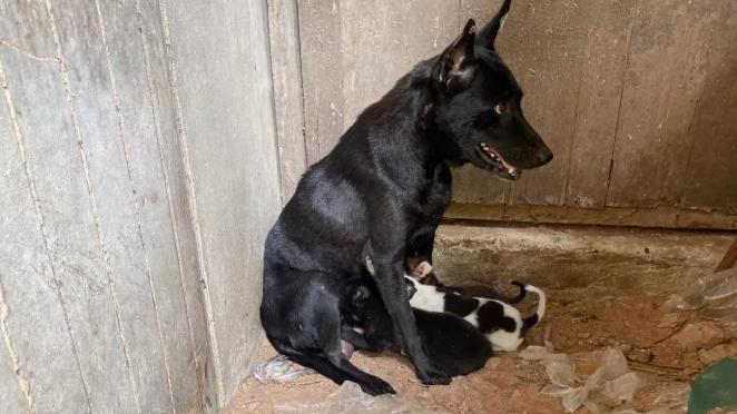Dogilike.com :: ชาวบ้านประณาม คนบาปฆ่าลูกหมาวัยหนึ่งเดือน ทิ้งศพไว้ดูต่างหน้า