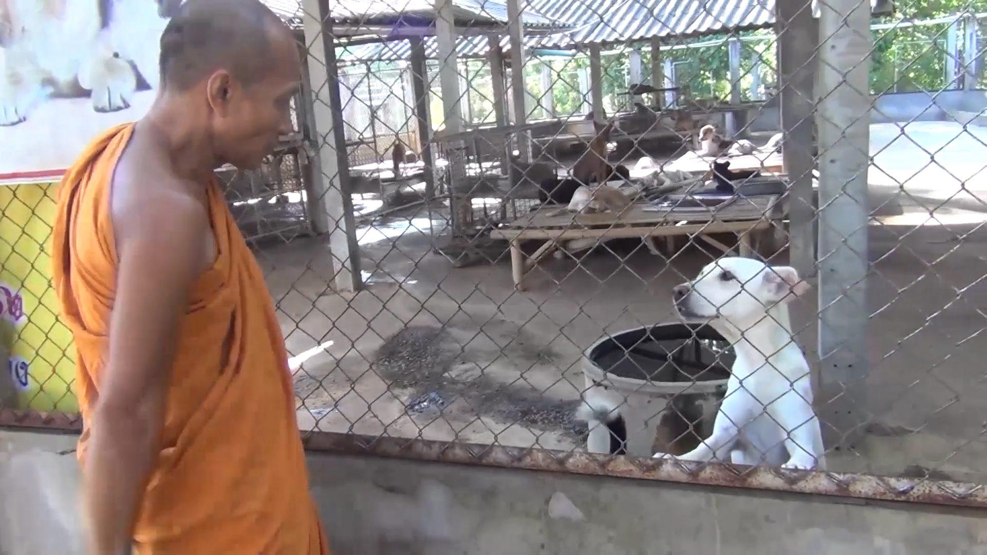 Dogilike.com :: วัดดังในลำปางเผย ผลกระทบโควิด หมาจรอดอาหาร-ไร้เงินบริจาค