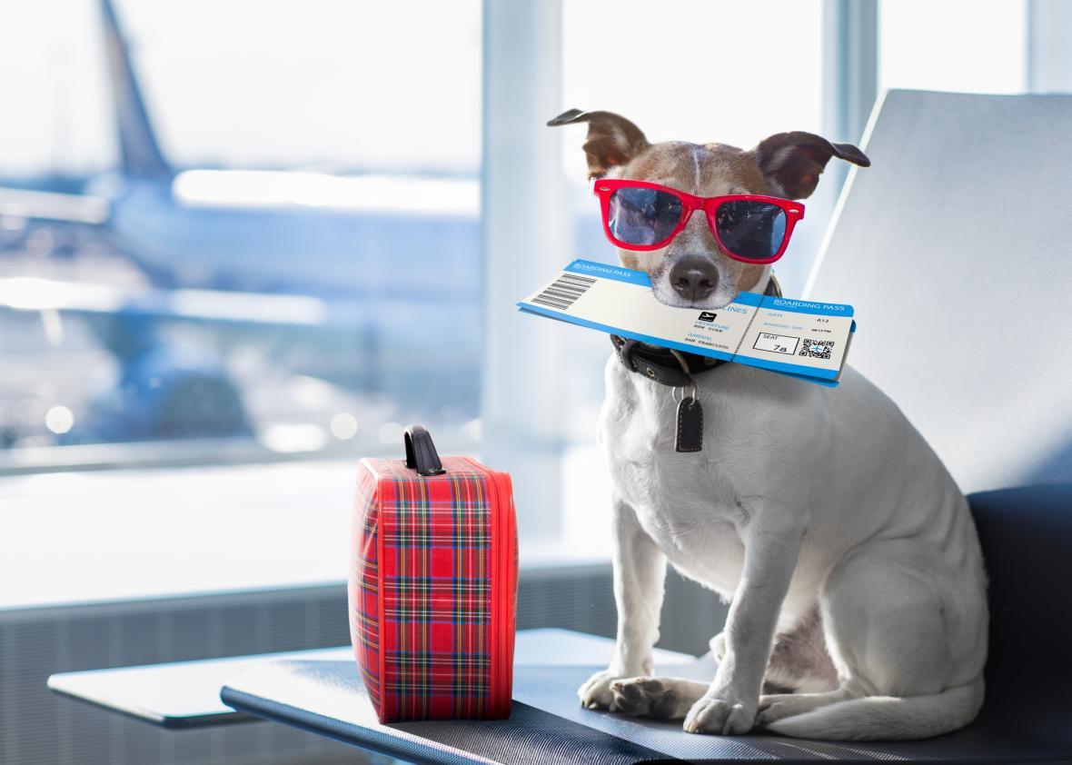 Dogilike.com :: พาหมา-แมว ขึ้นเครื่องไปต่างประเทศได้แล้ว! แต่ต้องกักตัวก่อนเดินทาง 14 วัน