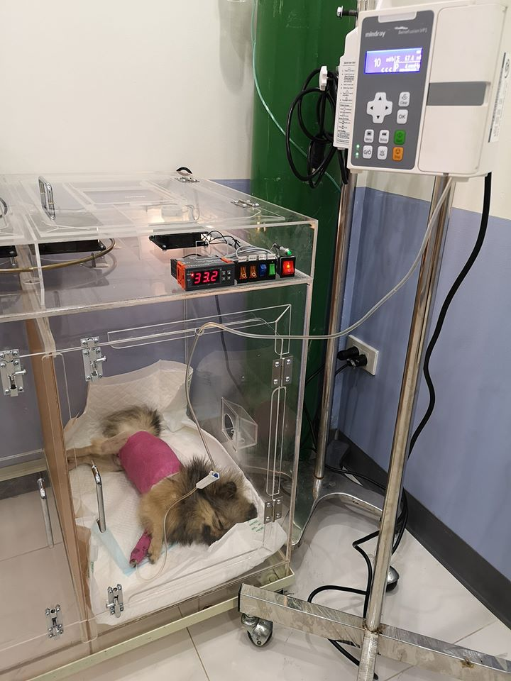 Dogilike.com :: ทิ้งหมาไว้ ร.พ. ดังที่สระบุรี หมอวอนเจ้าของมาแสดงความรับผิดชอบ