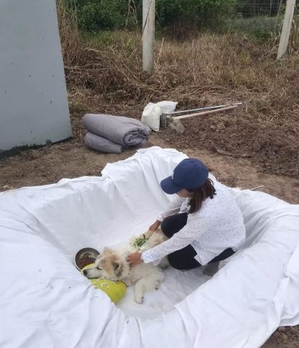 Dogilike.com :: สาวอุ่มศพบางแก้วแจ้งความ เอาผิดเจ้าของร็อตไวเลอร์บุกขย้ำจนตาย!