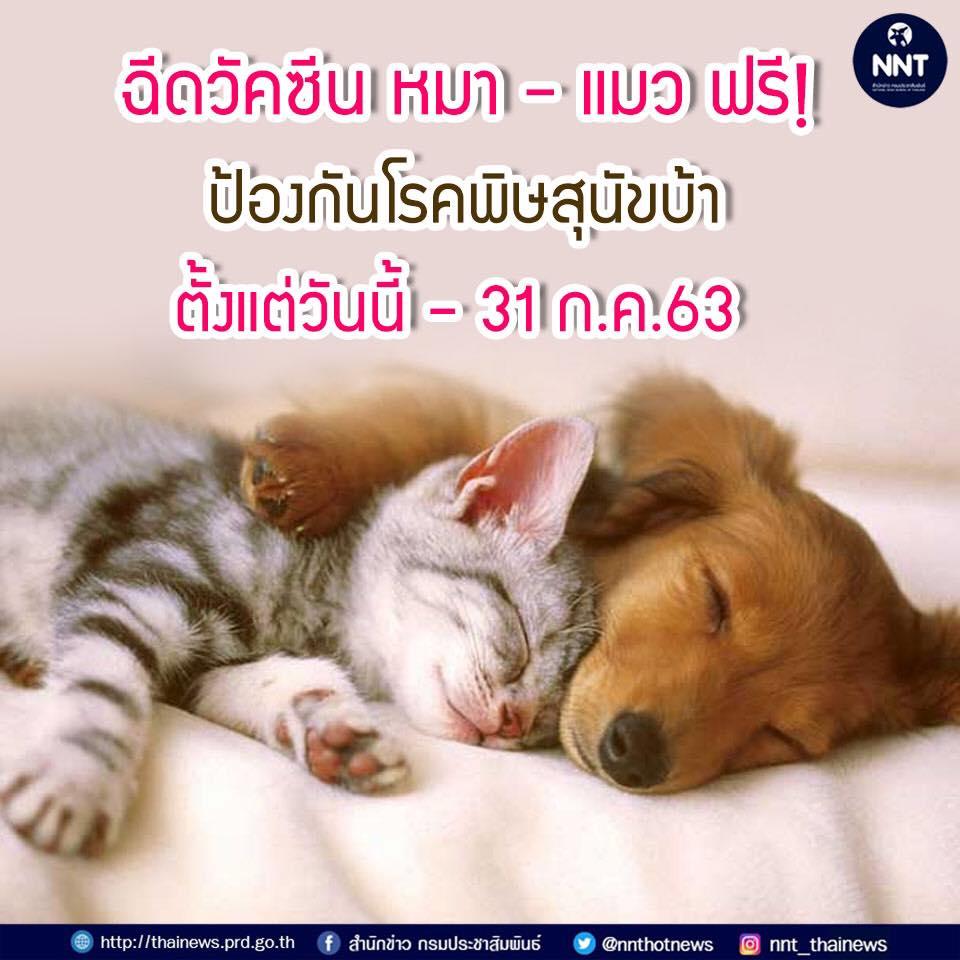 Dogilike.com :: ฉีดวัคซีน หมา-แมว ฟรี! ป้องกันโรคพิษสุนัขบ้า ตั้งแต่วันนี้ - 31 ก.ค.63