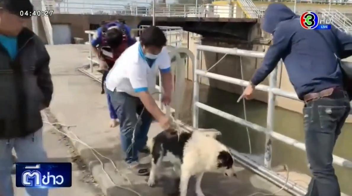 Dogilike.com :: ชาวบ้านชื่นชม กู้ภัยยอมเสี่ยงชีวิตโรยตัวลงเขื่อนช่วยชีวิตหมาบางแก้ว