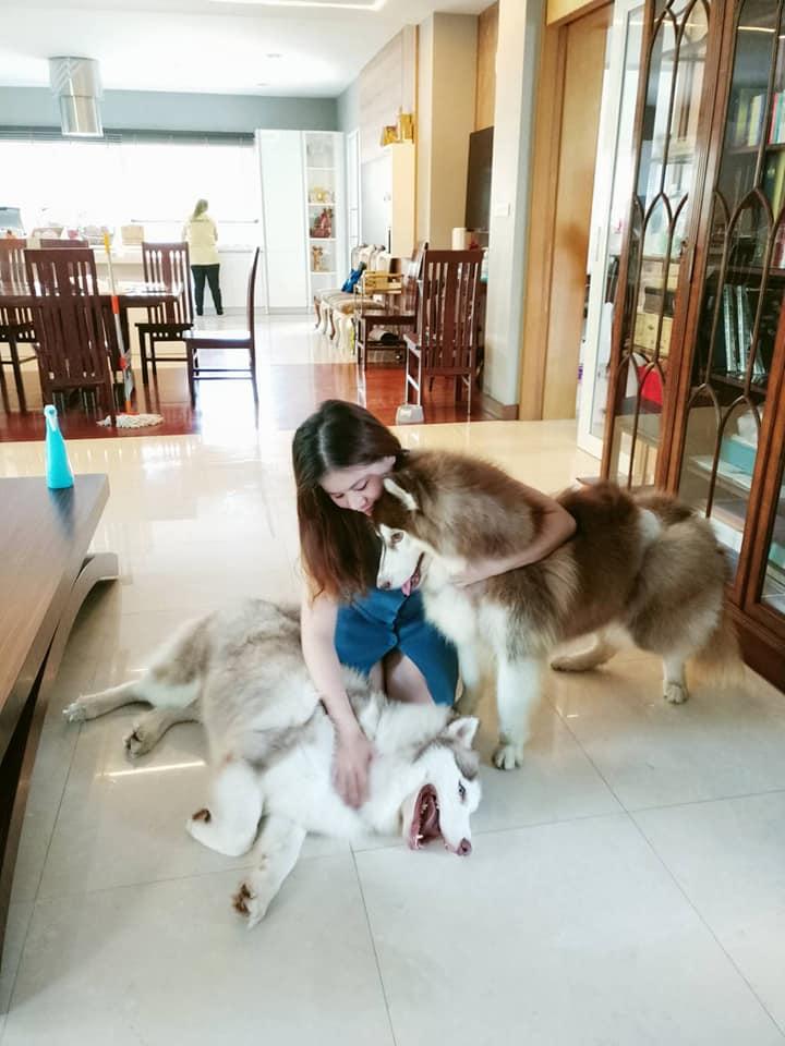 Dogilike.com :: เผยภาพน่ารัก พล.ต.อ. เสรีพิศุทธ์ กับการ Work From Home แบบมีน้องหมาคอยเฝ้าอยู่ใกล้ ๆ