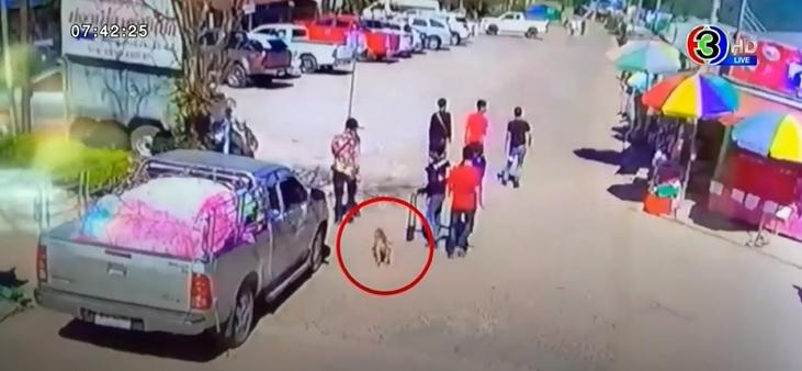 Dogilike.com :: หนุ่มโพสต์คลิปทวงคืนพิทบูล โดนนักท่องเที่ยวอุ้มขึ้นรถไปเฉย!