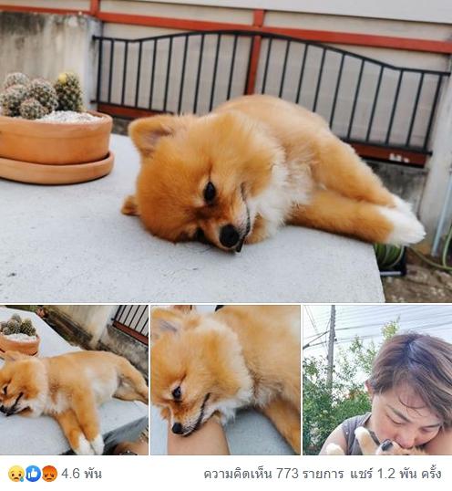 Dogilike.com :: เตือนภัย ... สาวแฉร้านตัดขนปล่อยหมาร้อนตายในกรง อ้างไม่ได้เปิดแอร์เพราะปรับปรุงร้าน