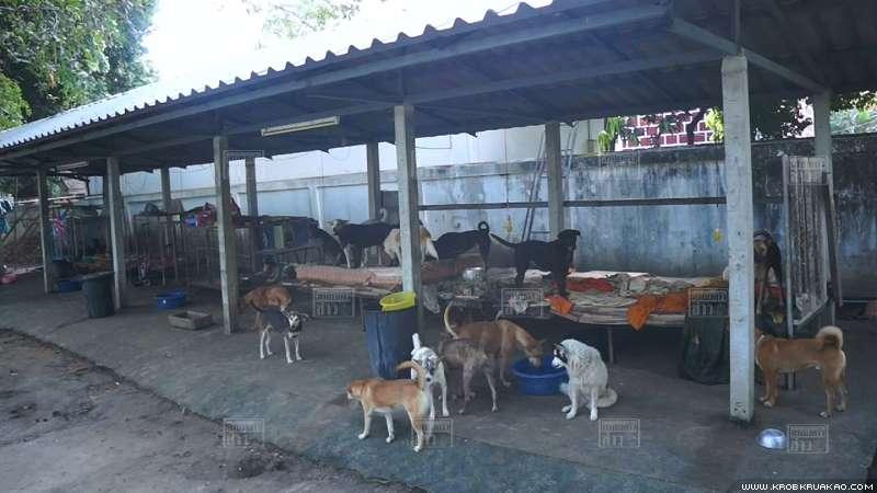 Dogilike.com :: เจ้าอาวาสจะไม่ทน! ขึ้นป้ายเตือนสติชาวบ้านอย่านำหมามาปล่อยวัด