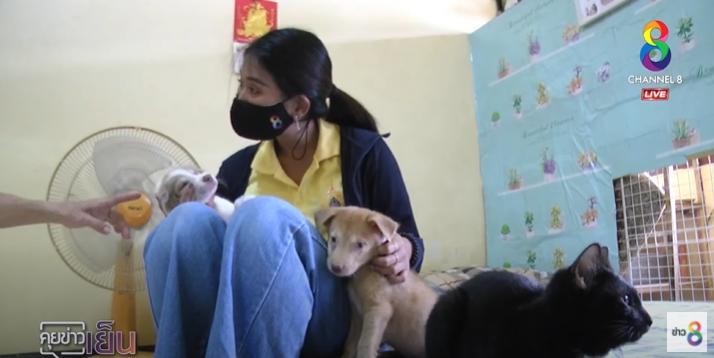 Dogilike.com :: วอนคนเมตตารับเลี้ยงหมา แมว 20 ชีวิต หลังเพื่อนร่วมแฟลตร้องเรียน