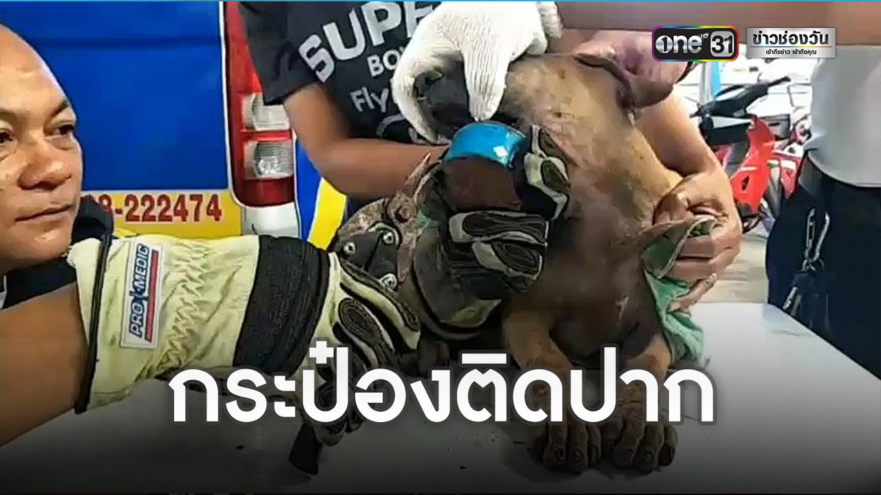 Dogilike.com :: ซนจนได้เรื่อง กู้ภัยพัทยาเร่งช่วยน้องหมาปากติดกระป๋องกาว