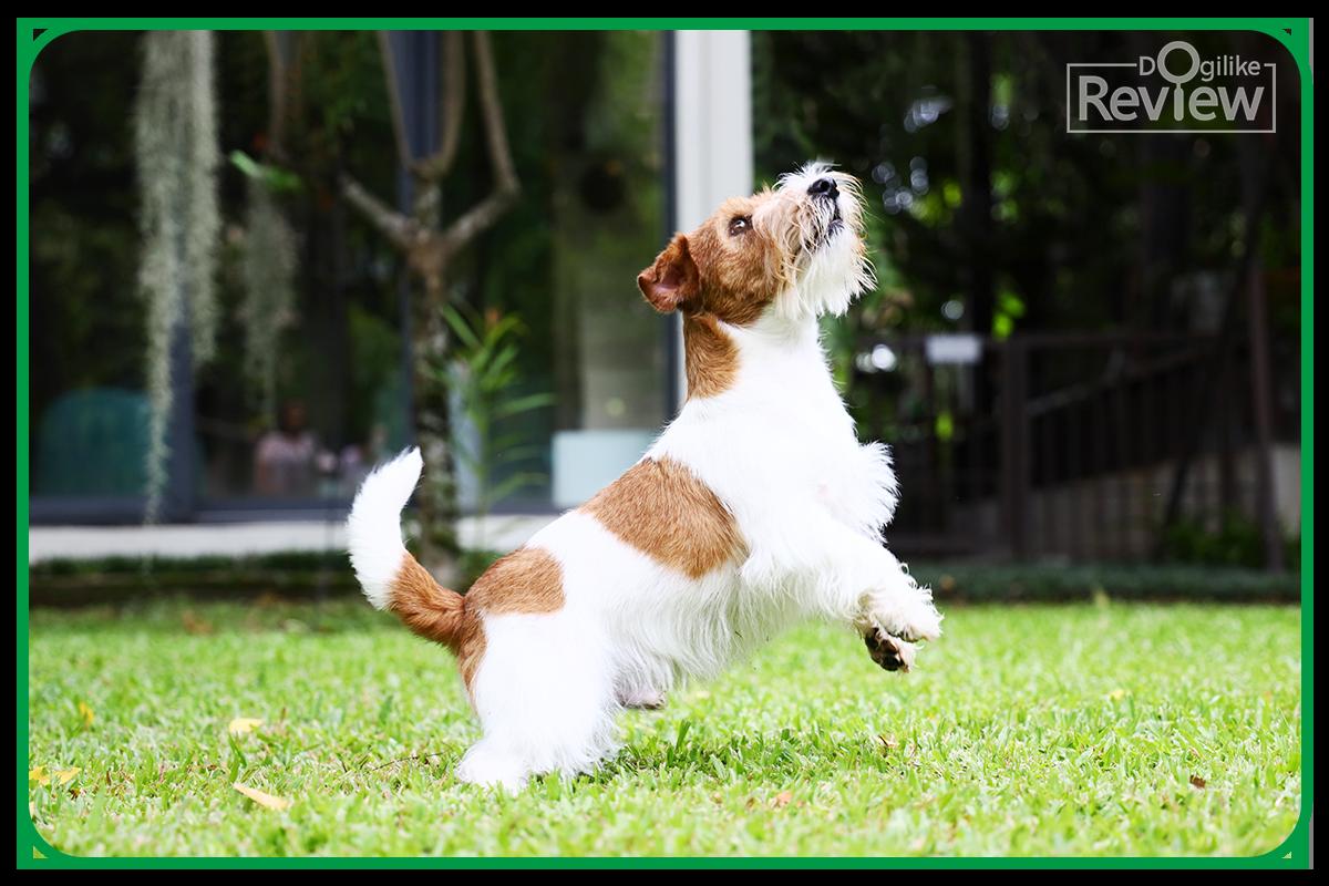 Dogilike.com :: ใหม่! ไอแอมส์ อาหารสุนัขเกรดพรีเมียม พัฒนาสูตรร่วมกับสัตวแพทย์
