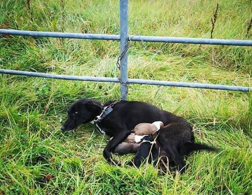 Dogilike.com :: ตูบถูกทิ้งพร้อมลูก 6 ตัว