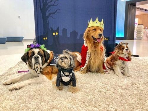 Dogilike.com :: พวกหนูมาทำงาน! สุนัขบำบัดบุกสนามบิน ช่วยคลายเครียดให้ผู้โดยสาร