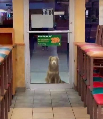 Dogilike.com :: ไวรัลทั่วโลก! ตูบจรจัดแสนรู้มานั่งรออาหารหน้าร้านแซนวิชทุกคืน (คลิป)