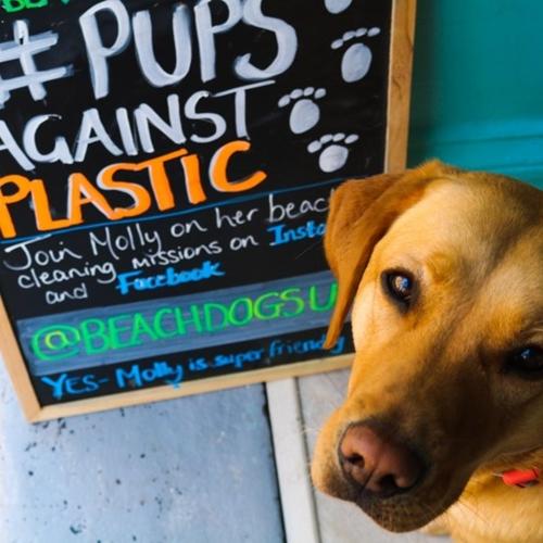 Dogilike.com :: น้องหมารักษ์โลก! Molly ลาบราดอร์น่ารักเก็บขยะริมชายหาดทุกวัน