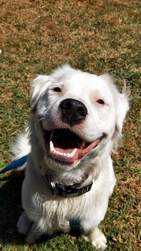 Dogilike.com :: รู้จัก! เจ้า Shiro ตูบหูหนวกตาบอดผู้ทำหน้าที่ปลอบใจเพื่อนสี่ขา